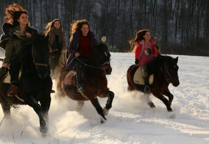 konji-srebrenica-1-520x360