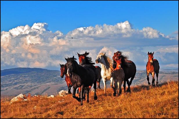 Divlji konji na Cincaru iznad Livna