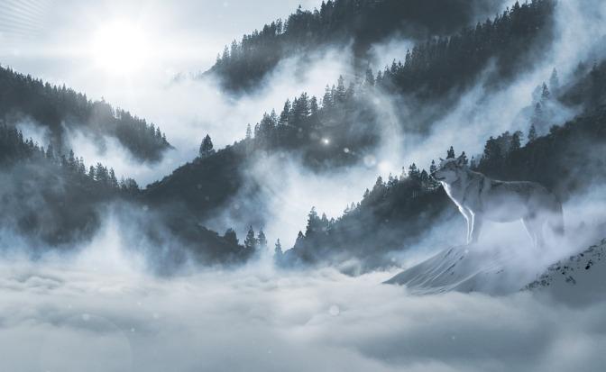Vuk u magli