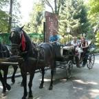 Sarajevska tradicija turističke vožnje fijakerom u kontinuitetu, je jedinstvena u Evropi